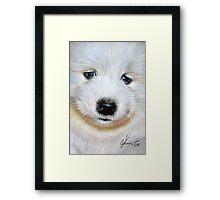 Samoyed pup Framed Print