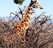 giraffe by Loader3000