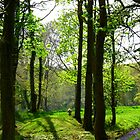 Enchanting Woods - Child's Paradise by Charmiene Maxwell-batten