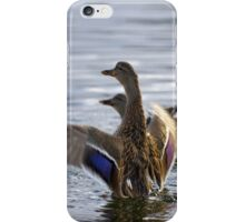 Mallard Flapping On Water It`s A Duck Off iPhone Case/Skin