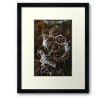 Wild flower in autumn Framed Print