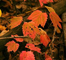 Fall Forest Floor by rdshaw