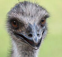 Emu by RickLionheart