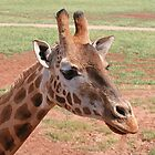 Gentle Giraffe by Jenny Brice