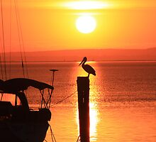 Sun and Pelican by Patricia Gibson