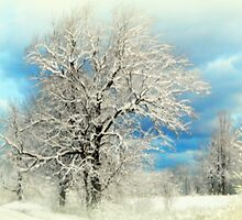 Winter White by Karen Cook