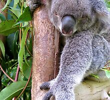 The Koala Stretch by Marilyn Harris