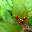 Family of Ladybugs by MoxieNox