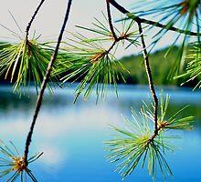 Sunshine on the Lake by goddarb