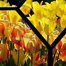 Iron Tulips by Sunshinesmile83