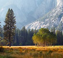 The Valley Floor by Mark Ramstead