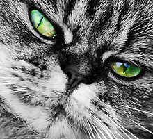 Cat with Ultra Green Eyes by incurablehippie