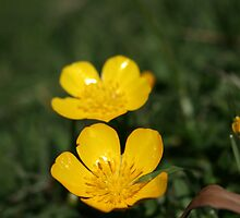 Buttercup Yello by Dlight