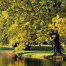 PARK TREE ORTON by mlynnd