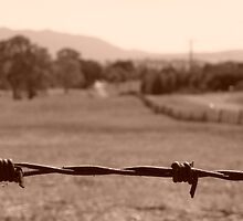 Barbed Wire  by Jaf76