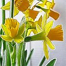 Daffodils with Fractalius by Jo Newman