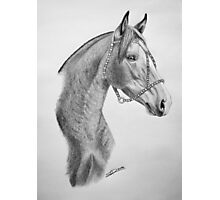 """""""Argentinian Beauty"""" - Criollo mare Photographic Print"""
