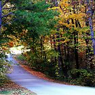Natchez Trace Lane by Ginger  Barritt