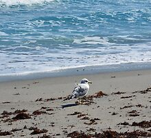 A lone seagull on the shore by TheLonelyAngel