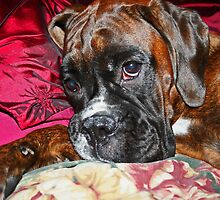 Dreamy -Boxer Dogs Series- by Evita
