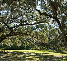 Oaks of Avery Island by Bonnie T.  Barry