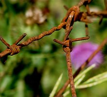 Barbed Flower by Spyte