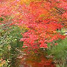 Otter River Colors by Rebecca Bryson