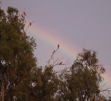 Bunch of galahs! by elphonline