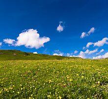 alpine meadow by peterwey