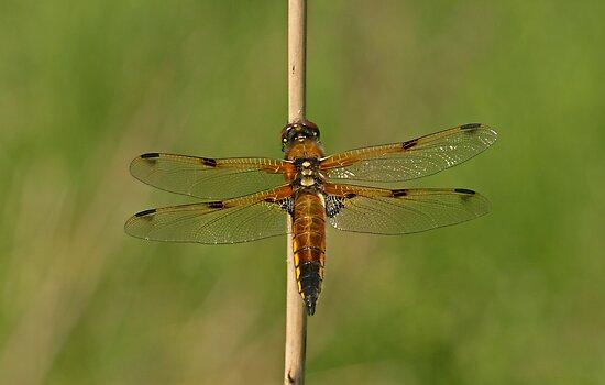 Beautiful Wings by Robert Abraham
