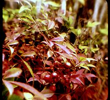 Ttv: Fresh Berries by PeggySue67