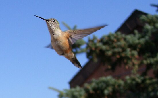 The Elusive Hummer by JenLand