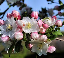 Awesome Blossoms by SmilinEyes