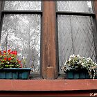 window by vpiombo