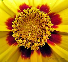 Inside Beauty by WJPhotography
