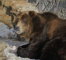 Griz is singular, Grizz is plural by Jay Ryser