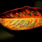leather leaf by vpiombo