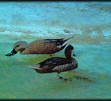sitting ducks by vpiombo