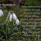 The Snowdrop by AnnDixon