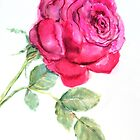 Single Rose by Lorna Gerard