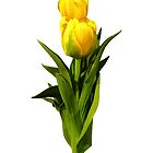 Yellow Tulips Tall and Short by Susan Savad