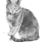 gray cat drawing by Mike Theuer