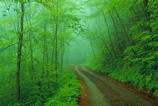 BALSAM MOUNTAIN ROAD by Chuck Wickham