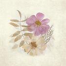 Flora 1 by Jayne Le Mee