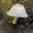 Little Mushroom by Tracy Faught