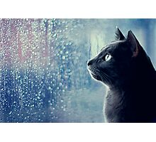 Kitty's Fascination Photographic Print