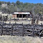 Fence of Twigs by Kimberly Miller