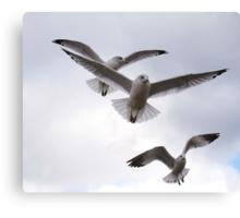 Hooked On Birds Canvas Print