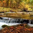 Autumn at the Jordan Cascades by Megan Noble