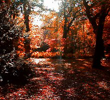 Autumn Sunlight by Trevor Kersley